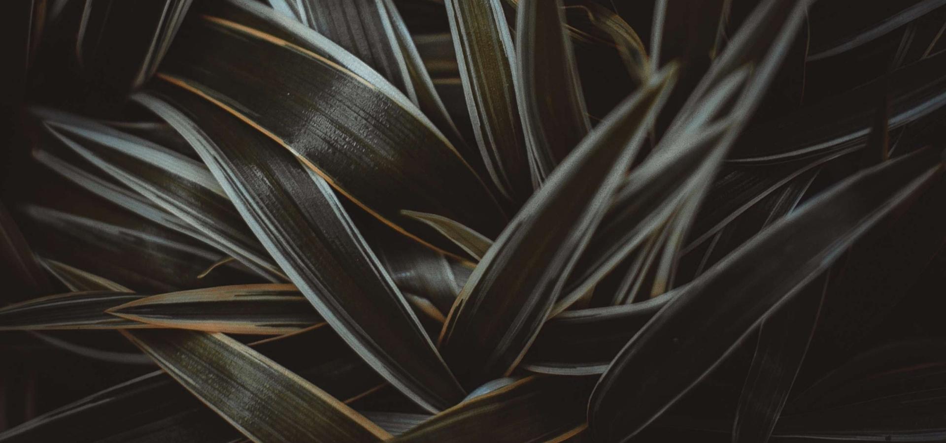dark long leaves in shadow